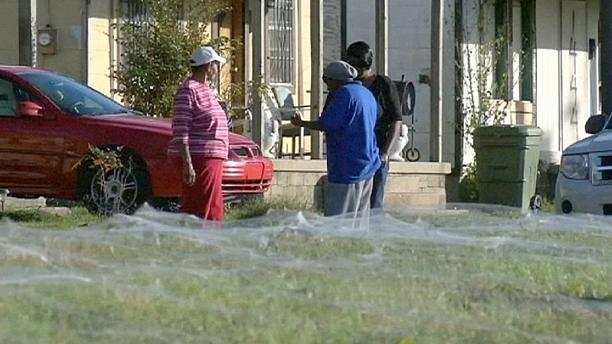 US: Giant spider web sets Memphis residents on edge