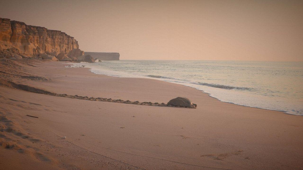 En las costas de Omán