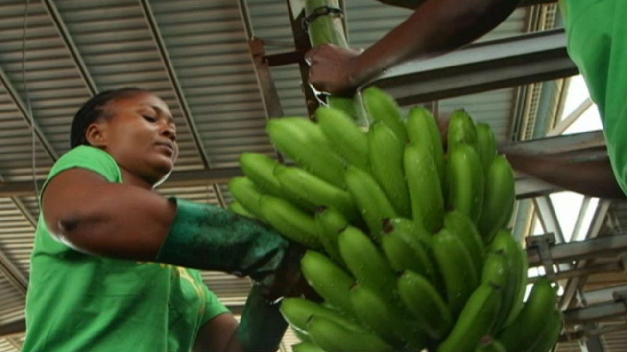 """La banane, l'""""or vert"""" de l'Angola"""
