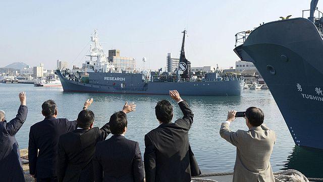 Japan's whaling fleet sets sail despite UN condemnation
