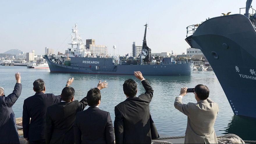 """Japonya """"bilimsel balina avı"""" programını tekrar başlattı"""