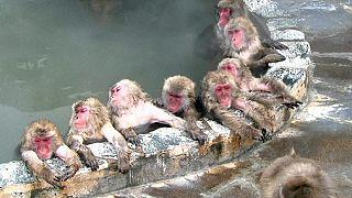 Japan: Ein heißes Bad im Winter