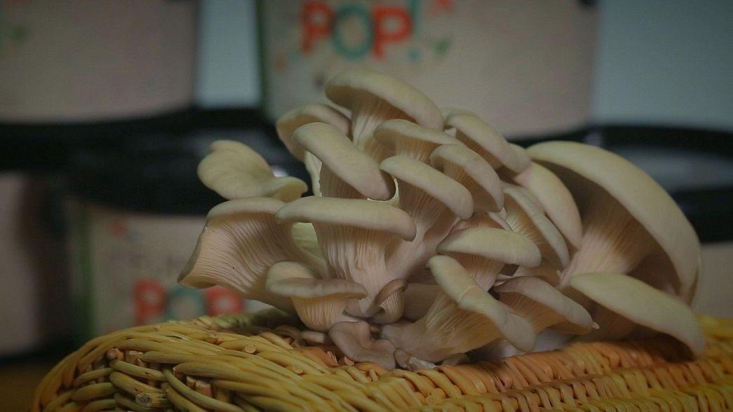 I funghi si coltivano in casa. Coi fondi del caffè