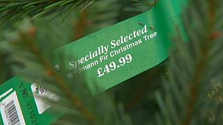 بازار پررونق فروش کاجهای کریسمس