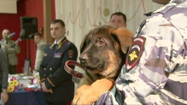 Rússia oferece cão à polícia francesa