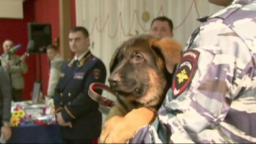 Russia gives France a puppy to replace police dog killed in Paris attacks