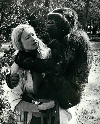 Koko, in 1972 with her lifelong friend, animal psychologist Francine \'\'Penny\'\' Patterson, who taught the gorilla sign language.