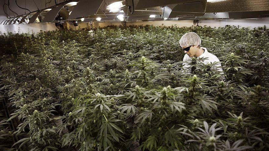 Image: Canada marijuana