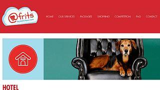 Cape Town: un hôtel de cinq étoiles pour des chiens