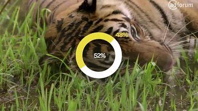 Tiger Royalty (Panthera)