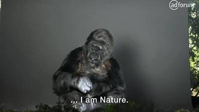 Koko (Noé)