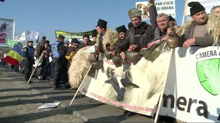 Romania: Shepherds protest