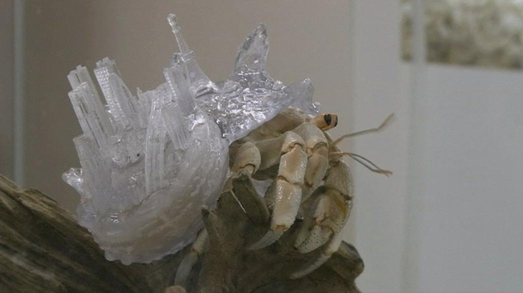 A hermit's life: Tokyo artist creates bespoke shells for living crabs