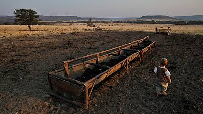 Drought throttling SA food security