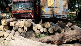 Senegal losing battle against illegal loggers as desert advances