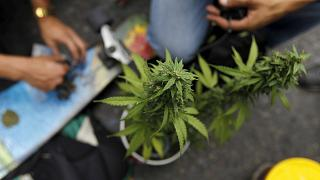 Colombia legalises medical marijuana
