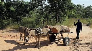 Africa wildlife under extinction