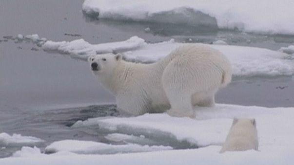 Теплый арктический декабрь: на Северном полюсе чуть меньше 0