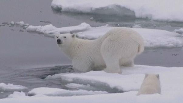 Tiefdruckgebiet treibt Tropenluft zum Nordpol