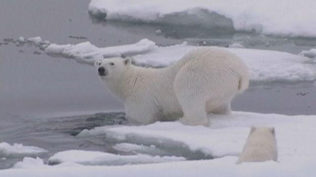 El Nino dünyayı kasıp kavururken, Kuzey Kutbu ısındı