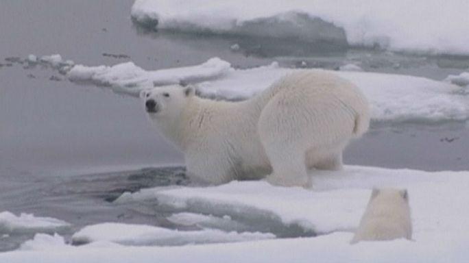 A megszokottnál sokkal melegebb van az Északi-sarkon