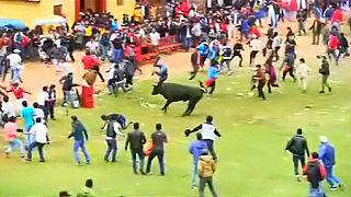 البيرو: إصابة ثمانية أشخاص في حفل سنوي لإطلاق الثيران