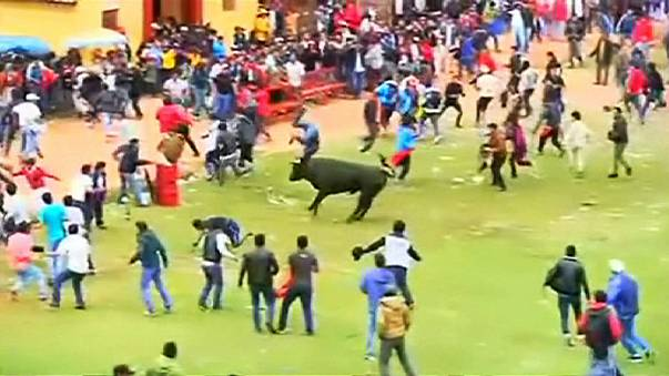 Peru: Stiere verletzen mehrere Menschen