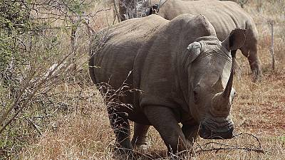 'Instant Detect' camera to help fight poaching
