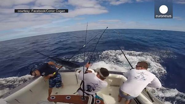 ماهیگیران در جدال با یک نیزه ماهی غول پیکر