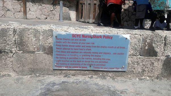 Image: Nurse shark swimming policy