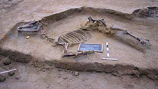 Τάφο με οστά αλόγου και ανθρώπων ανακάλυψε η αρχαιολογική σκαπάνη στο Φαληρικό Δέλτα