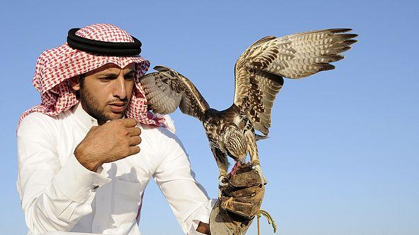 150 faucons à 200 000 euros pièces : la fauconnerie, un sport coûteux !