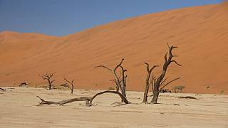 Severe drought threatens food security in South Africa