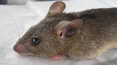 Lassa Fever: Nigeria's government tracing 15 people in Abuja