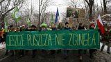Варшава: демонстрация против вырубки Беловежской пущи