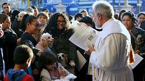 Mexicο: Pets are splashed with holy water