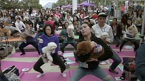 'Doga' world record set in Hong Kong