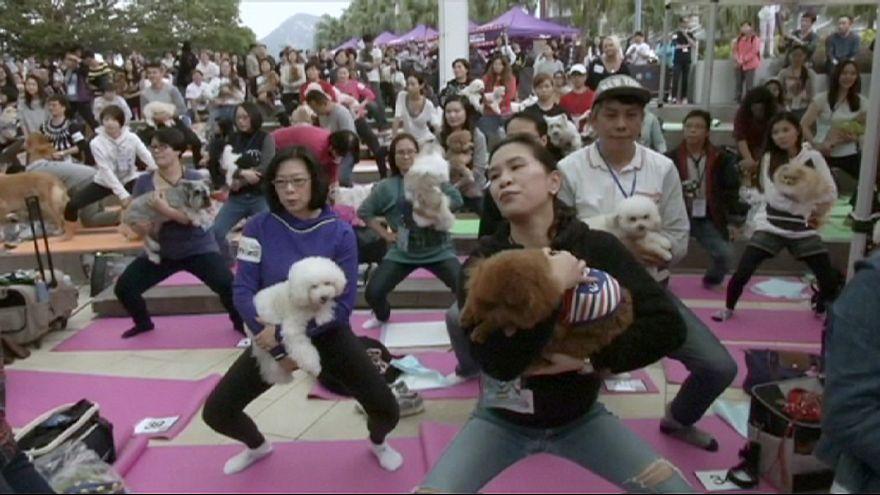 أكبر تجمع لممارسة اليوغا مع الكلاب في هونغ كونغ