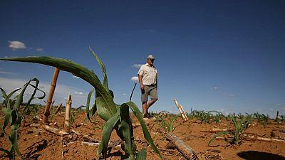 Afrique du Sud : solidarité face à la sécheresse