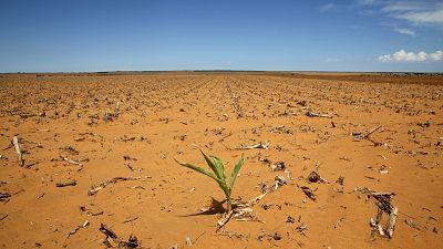 L'Afrique du Sud et la Zambie en proie à la sécheresse
