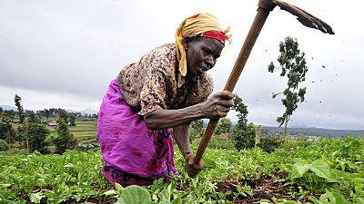 Centrafrique : près de 2,5 millions de personnes menacées de famine