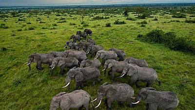 Gabon to deploy more rangers to counter ivory poachers