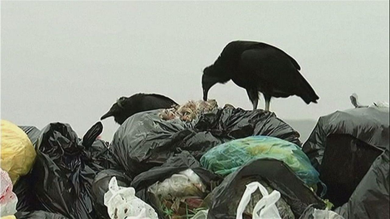 Peru: Geier gegen Müllsünder