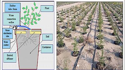 Tunisia gains with innovative irrigation technology