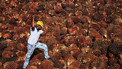 Alternative to palm oil could help save the environment