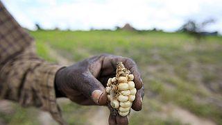 Zimbabwe secures $200m to import maize