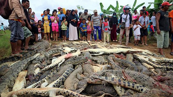 Image: Local residents look at the carcasses of hundreds of crocodiles