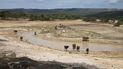 Une terrible sécheresse en vue en Ethiopie (ONG)