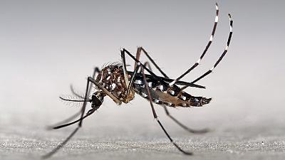 Les mères brésiliennes s'inquiètent de la progression du virus Zika