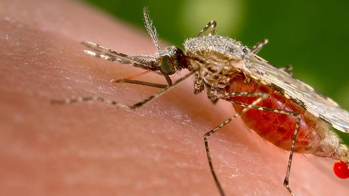 Dániában is van Zika-fertőzött